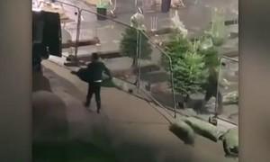 Clip nhóm trộm dùng xe tải lấy cắp 300 cây thông Noel