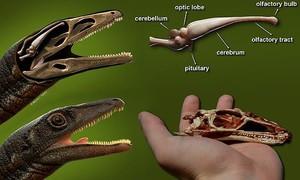 Clip tái tạo bộ não khủng long hoàn chỉnh đầu tiên