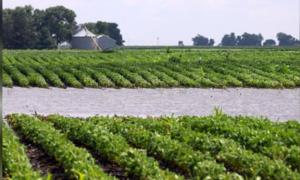 Các công ty Trung Quốc mua đậu nành Mỹ bất chấp chính phủ kêu dừng