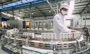 Doanh thu tăng trưởng, hoạt động ổn định và xuất khẩu tích cực