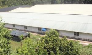 """Quảng Nam: Người dân bị """"tra tấn"""" bởi mùi hôi của trang trại nuôi heo"""
