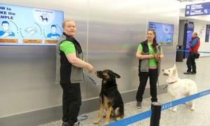 Phần Lan dùng chó đánh hơi tại sân bay tìm người nhiễm nCoV