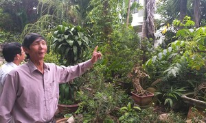 Đà Nẵng: Chính quyền thua kiện vụ đền bù đất giá rẻ mạt