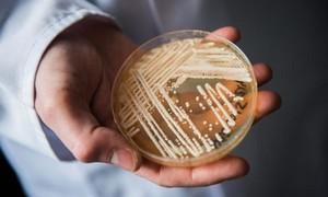 Phát hiện 'siêu nấm nguy hiểm' trên hàng chục bệnh nhân nCoV