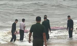 4 giờ giải cứu cá voi nặng 3 tấn dạt vào bờ biển