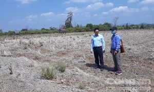 Ruộng khô, dân khát dưới chân công trình thủy lợi 3.000 tỷ đồng