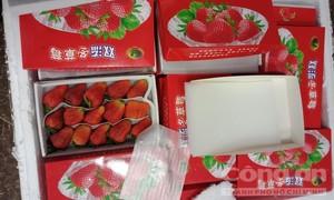 Lâm Đồng:  Thu giữ 13 thùng dâu tây nhập lậu từ Trung Quốc