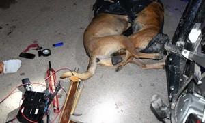 """Hai """"cẩu tặc"""" đang đi trộm chó thì bị Cảnh sát cơ động """"khóa tay"""""""