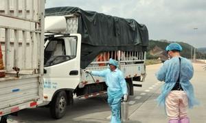 Trung Quốc tạm dừng nhập khẩu thanh long qua khu vực Cầu Phao