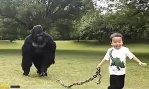 Cảm động người cha hóa trang thành khỉ đột để con dắt đi chơi