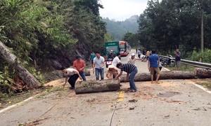 CSGT giúp dọn dẹp cây ngã chắn ngang đường gây ách tắc