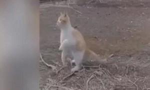 Clip mèo dùng một chân tóm gọn chim đang bay