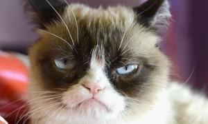 'Cô mèo khó tính' nổi tiếng trên mạng xã hội qua đời