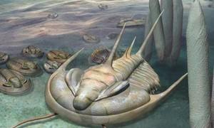 """Phát hiện hóa thạch bọ """"bạo chúa"""" hơn 500 triệu năm trước"""