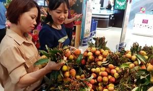 500 tấn vải thiều Lục Ngạn chính gốc có mặt tại chuỗi bán lẻ Saigon Co.op
