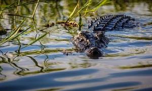 Bé trai 10 tuổi bị cá sấu ăn thịt trước sự bất lực của người thân
