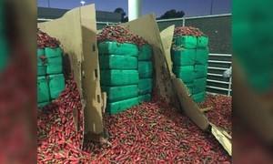 Bốn tấn cần sa được ngụy trang trong xe chở... ớt