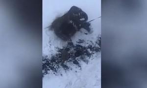 Clip hai con voi 'tháo chạy' khỏi rạp xiếc giữa lúc tuyết rơi ở Nga