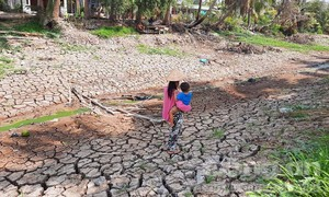 Cận cảnh ĐBSCL mùa hạn, mặn khốc liệt