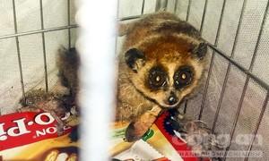 Tịch thu 27 cá thể động vật hoang dã