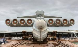 """Nga chuyển """"quái vật biển"""" Caspi đến trưng bày ở công viên"""