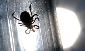 Trung Quốc cảnh báo bệnh lây từ bọ chét, khiến ít nhất 7 người chết
