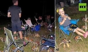 Hình ảnh cua khổng lồ tràn tới lều người cắm trại gây sốt mạng xã hội