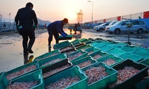 Trung Quốc phát hiện nCoV trên gói hàng thuỷ sản nhập khẩu