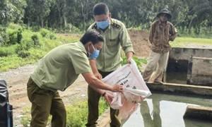Thuốc bảo vệ thực vật, phân bón giả tràn lan ở miền Tây (kỳ 3)