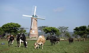 Hệ thống trang trại Vinamilk tăng trưởng về quy mô lẫn hiệu quả hoạt động
