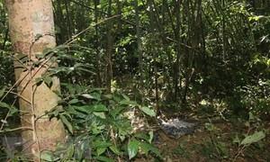 Giẫm phải bẫy khi đi rừng tìm cây thuốc, bị đạn bắn xuyên phổi