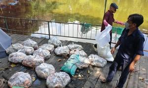 Hàng tấn cá chết nổi trắng hồ tại công viên Hoàng Văn Thụ ở TPHCM