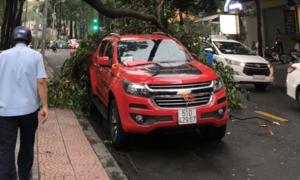 Nhánh cây gãy rớt trúng ô tô ở trung tâm Sài Gòn trong cơn mưa