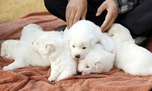 Tổng thống Hàn Quốc đề xuất cấm ăn thịt chó