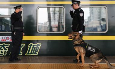 Trung Quốc nhân bản chó 'Sherlock Holmes'
