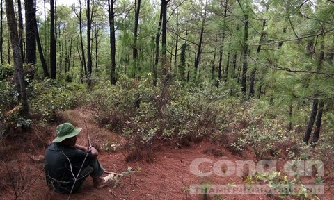 Bán đất mộ trái phép trong rừng đặc dụng