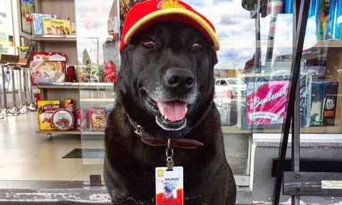 Chú chó bị bỏ rơi trở thành nhân viên trạm xăng