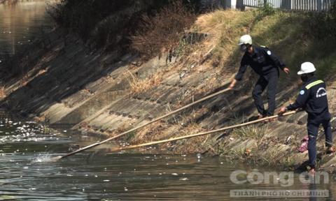 Cá lại chết hàng loạt trên sông Phú Lộc