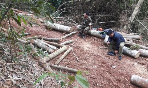 """Vô tư phá rừng phòng hộ vì có """"xi nhan""""?"""