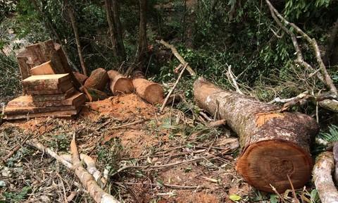 Rừng Kon Tum bị tàn phá khủng khiếp