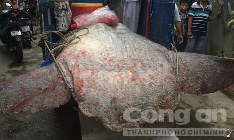 Ngư dân chôn cất cá Bà theo phong tục truyền thống