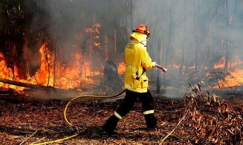 Lính cứu hỏa Úc viết thư xin lỗi người dân vì đã... uống sữa trong nhà
