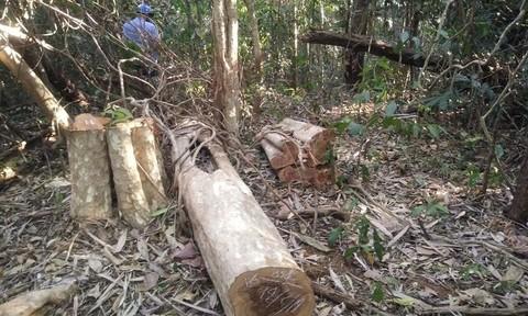 Khởi tố vụ phá rừng quy mô lớn ở Đắk Nông