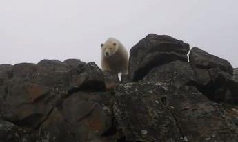 """Clip phút sinh tử của đoàn làm phim khi """"chạm mặt' gấu Bắc Cực"""