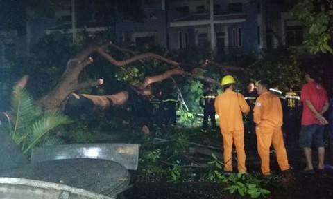 Mưa lớn, cây cổ thụ bật gốc đè trúng một người dân