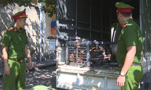 Bắt nhóm đối tượng mua con hổ sống 240 kg về nấu cao