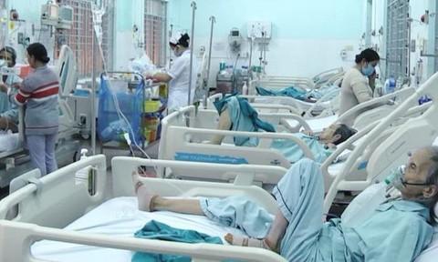 Nhiều người bị đốt nhập viện vì ong vò vẽ tấn công