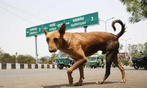 Chó hoang vào bệnh viện cắn chết trẻ sơ sinh