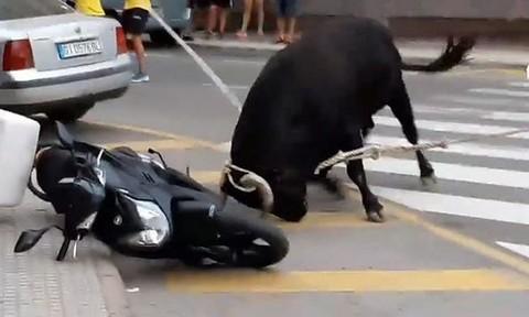 Clip bò điên tấn công người đi đường