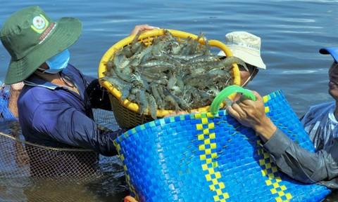 """Thực hiện """"3 tại chỗ"""" ở ĐBSCL: Doanh nghiệp thủy sản than khó"""